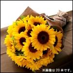 生産者から直送!金井さんの元気なひまわりの花束 30本